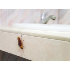 4 безпогрешни знака, че ви трябва отрова за хлебарки