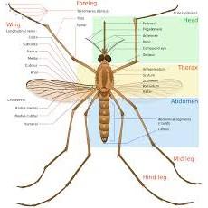 Ефективни средства против комари