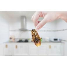 3 ефикасни решения срещу хлебарките в дома