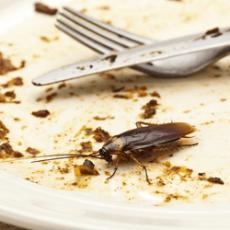 Защо изведнъж се появиха хлебарки в кухнята?
