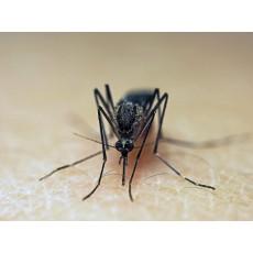 Привличат ли се комарите от определени цветове