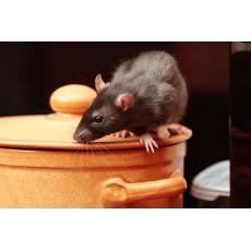 Мишки в кухнята 3 лесни средства за прогонване