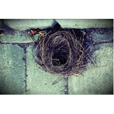 Премахване на гнездо на вредни птици