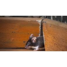 Как да се отърва от мишките в стените на дома си
