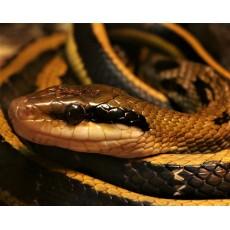 5 причини да имате змия в двора