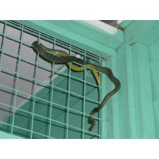 Какво да правиш, ако е влязла змия в къщата ти