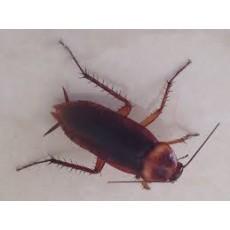 10 прости решения да се отървем от хлебарките