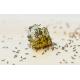 Нашествие от мравки в кухнята – как да се справя