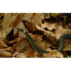 Защо змиите ходят при едни хора, а при други - никога?