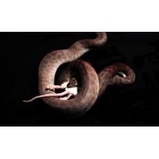 5 неща, с които змиите се хранят