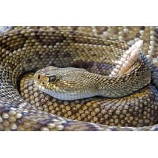 Срещу змиите – да открием къде се крият
