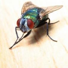 Уморихте ли се да се борите против мухите