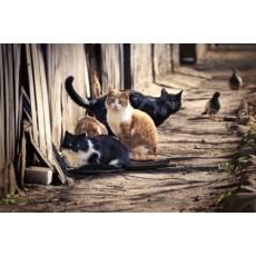 Как да предпазя двора от уличните Котки