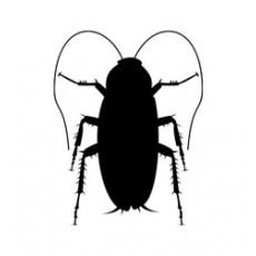 """10 научни причини за """"издръжливостта"""" за хлебарките"""