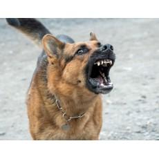 Защо ме лаят уличните кучета