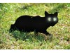 Котки 3 бр. Плашила прогонващи птици (Гълъби, Врабчета, Гарвани, Косове)  Mondo Verde (2) на най-добра цена