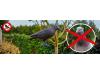 Плашило за дребни птици (гълъби, косове, синигери и др.)  във формата на Гарван в естествен размер. (5) на най-добра цена
