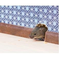 Как да изгоня мишките от къщата ми, бързо и без усилия