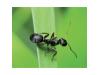 ЕКО спрей прогонващ мравки Ecovit - 1000 мл. (3) на най-добра цена