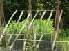 Ala Stop сребриста ЛЕНТА прогонваща птици (Гълъби, Врабчета, Скорци, Косове, Врани, Пчелояди, Свраки, Кълвачи и др.), 40 м дължина (3) на най-добра цена