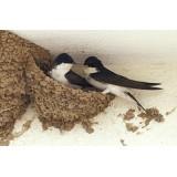 4-THE BIRDS бариера за птици, Течен препарат срещу птици (лястовици, гълъби, скорци и др.) - 1200 мл.