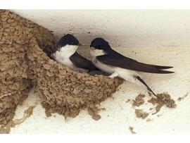 Еко продукти - 4-THE BIRDS БАРИЕРА ЗА ПТИЦИ, ТЕЧЕН ПРЕПАРАТ СРЕЩУ ПТИЦИ (ЛЯСТОВИЦИ, ГЪЛЪБИ, СКОРЦИ И ДР.) - 300 мл. на най-добра цена