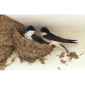 4-THE BIRDS бариера за птици, Течен препарат срещу птици (лястовици, гълъби, скорци и др.) - 1200 мл. на най-добра цена