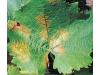 ХВОЩ Натурален концентрат против брашнена мана по лозята, сива плесен/сиво гниене, гъбна болест (къдравост) по праскови, нектарини, бадеми, алтернария по доматите и краставиците, септория по пшеницата,  Flortis Naturae, 500 мл. (3) на най-добра цена