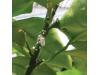 Натурален спрей против листни въшки, трипси и белокрилки Flortis Naturae, 500 мл. (7) на най-добра цена