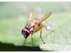 Жълт холотропен капан с лепило за Листни въшки и Плодови мушици, Flortis Bio – 5 бр. (5) на най-добра цена