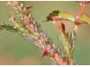 Натурален спрей против листни въшки, трипси и белокрилки Flortis Naturae, 500 мл. (4) на най-добра цена