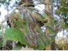 Натурално лепило против пълзящи и летящи насекоми по растенията и овошките, Flortis Eco – 500 гр. (3) на най-добра цена