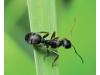 Натурално лепило против пълзящи и летящи насекоми по растенията и овошките, Flortis Eco – 500 гр. (2) на най-добра цена