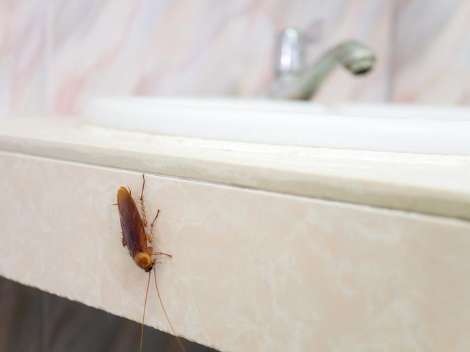 4 безпогрешни знака, че ви трябва отрова за хлебарки (1)
