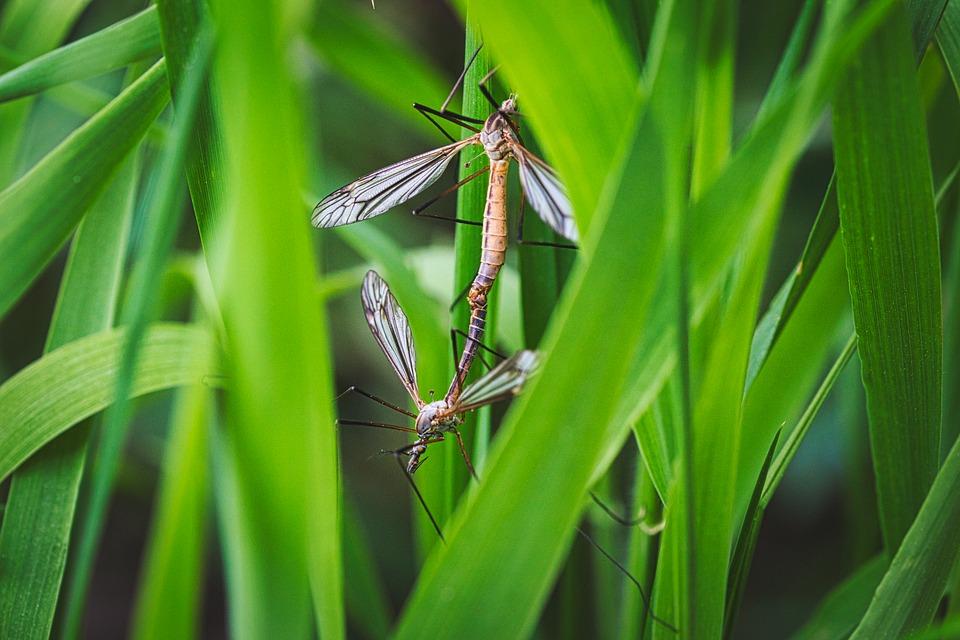 Уреди против комари - безвредни и ефикасни!