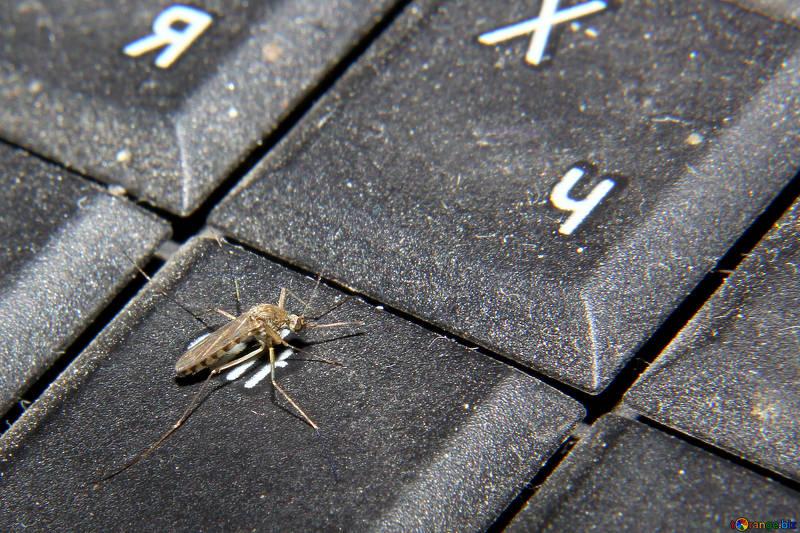 Лесни и изгодни средства против комари и насекоми!
