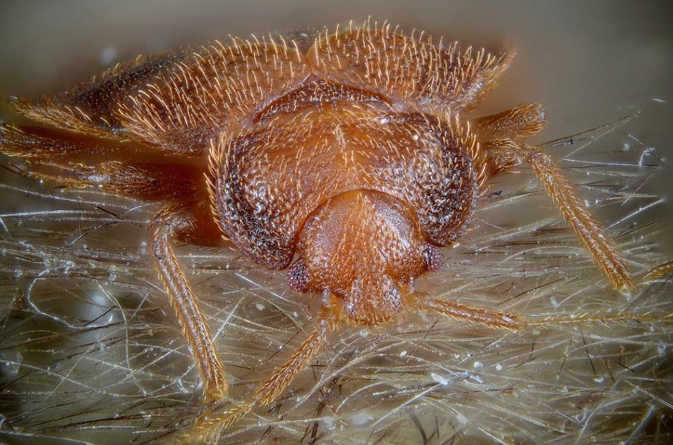 Капани за дървеници Bug Dome 1