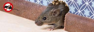 Ядат ли мишките кучешка храна (1)