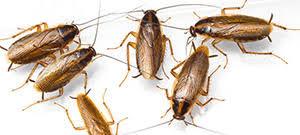 Ефикасни методи срещу хлебарки на разумни цени