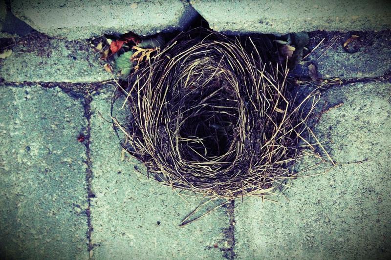 Премахване на гнездо на вредни птици (1)