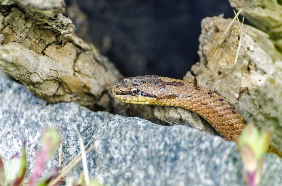 Ефективен уред за прогонване на змии. Решения против змии на супер цени!