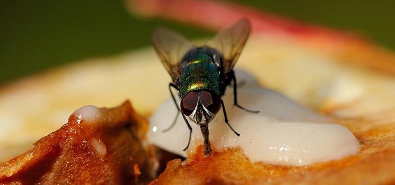 Против кацането на мухи върху храната