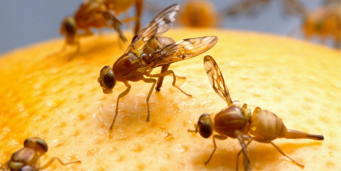 Нашествие от мухи и ефикасен препарат против мухи