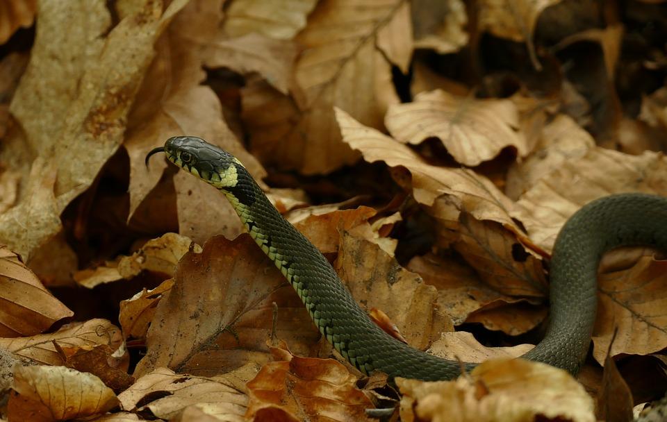 Против змии в двора (1)