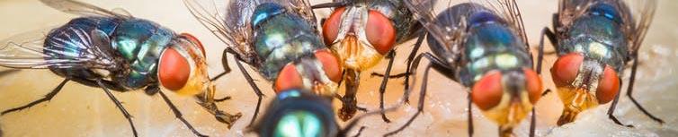 Ефикасни уреди против мухи. Професионални инсектицидни лампи против мухи.