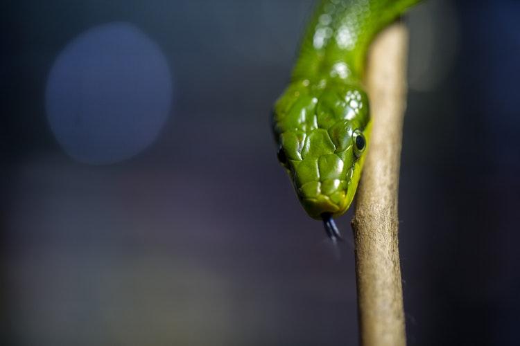 Трайна защита чрез уред против змии Супер предложение