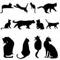 Уред за прогонване на котки на достъпна цена.