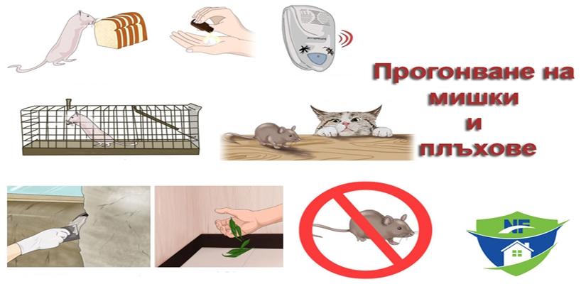 Уреди за прогонване на мишки и плъхове - безвредни и ефикасни!
