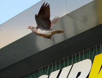 Защита от птици с шипове (2)