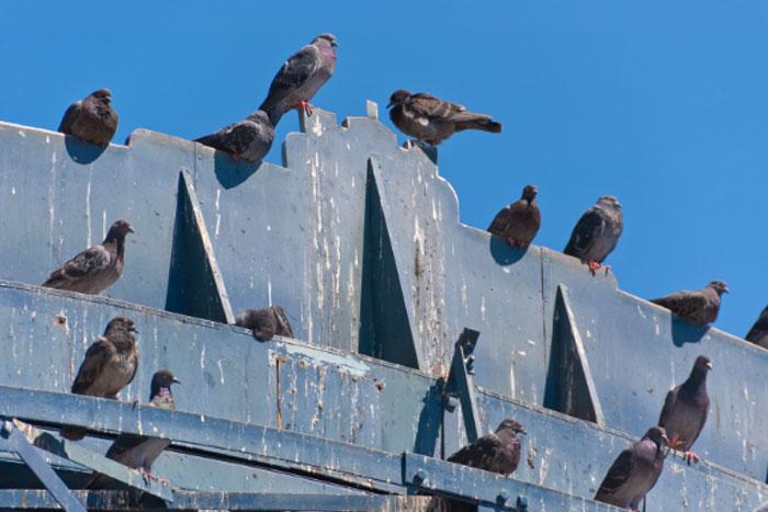 Защита от птици на рекламни табели (1)